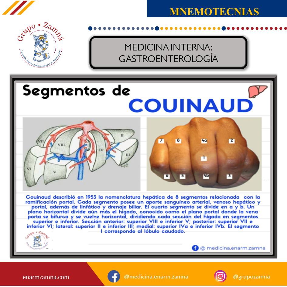 MEDICINA INTERNA GASTROENTEROLOGÍA SEGMENTOS DE COUINAUD